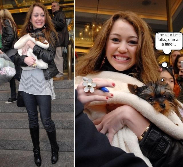 "Miley Cyrus, aka Hannah Montana with New Yorkie Puppy ""Shooter"""