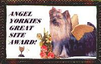 Angel Yorkies' Award