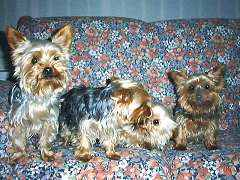 Cassie, Lucy, Tippy, and Peppy
